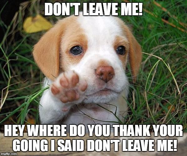 dog puppy bye | DON'T LEAVE ME! HEY WHERE DO YOU THANK YOUR GOING I SAID DON'T LEAVE ME! | image tagged in dog puppy bye | made w/ Imgflip meme maker