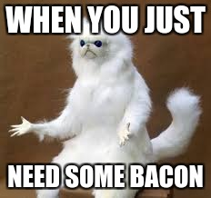 Persian Cat | WHEN YOU JUST NEED SOME BACON | image tagged in lmao | made w/ Imgflip meme maker