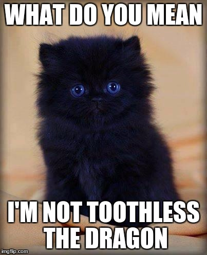 insanely cute kitten | WHAT DO YOU MEAN I'M NOT TOOTHLESS THE DRAGON | image tagged in insanely cute kitten | made w/ Imgflip meme maker
