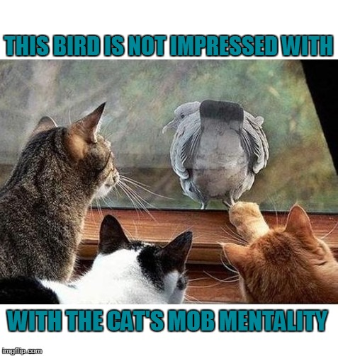 THIS BIRD IS NOT IMPRESSED WITH WITH THE CAT'S MOB MENTALITY | made w/ Imgflip meme maker