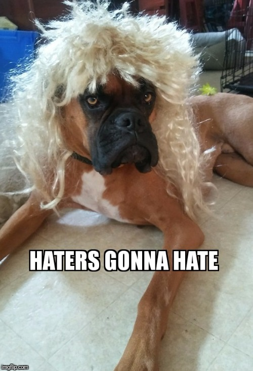 image tagged in bruiser pup,boxer,grumpydog,samuel l jackson,haters gonna hate | made w/ Imgflip meme maker