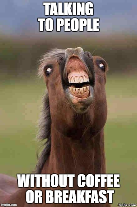 horse face | TALKING TO PEOPLE WITHOUT COFFEE OR BREAKFAST | image tagged in horse face | made w/ Imgflip meme maker