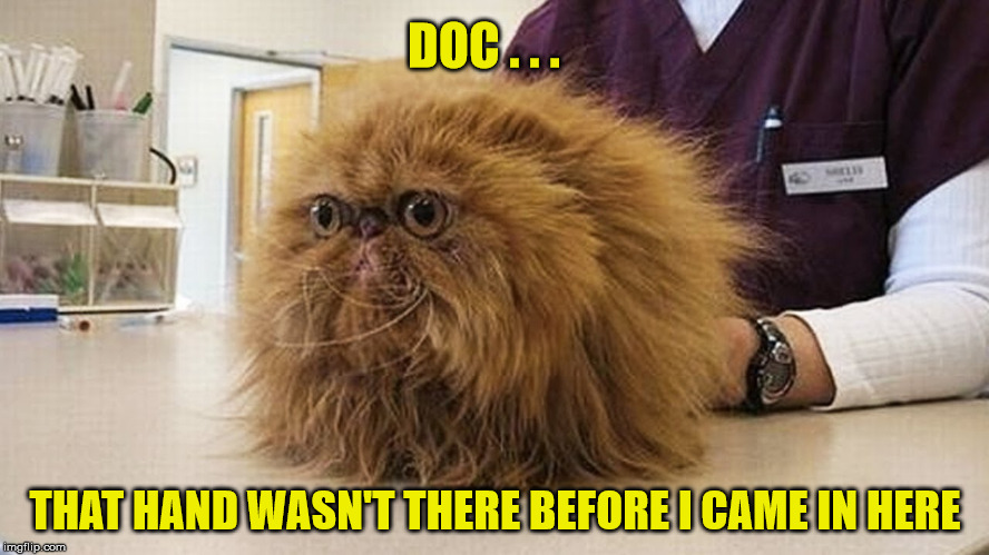 You're In My Negative Space | DOC . . . THAT HAND WASN'T THERE BEFORE I CAME IN HERE | image tagged in cat,memes,funny animals,dog,doctor | made w/ Imgflip meme maker