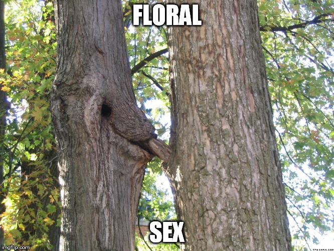 FLORAL SEX | made w/ Imgflip meme maker