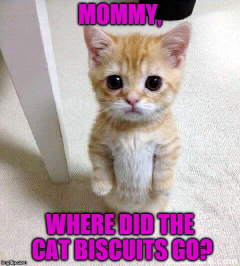 Cute Cat Meme | MOMMY, WHERE DID THE CAT BISCUITS GO? | image tagged in memes,cute cat | made w/ Imgflip meme maker