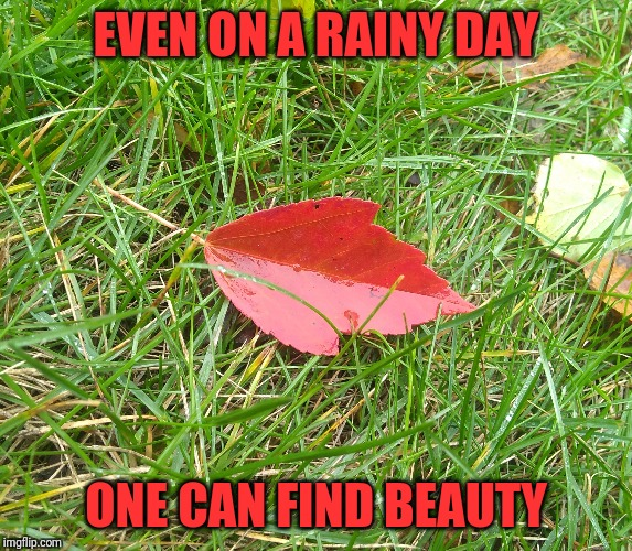 You Just Have To Know Where To Look | EVEN ON A RAINY DAY ONE CAN FIND BEAUTY | image tagged in memes,fall,rain,beauty | made w/ Imgflip meme maker