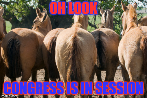 Red AND Blue | OH LOOK CONGRESS IS IN SESSION | image tagged in memes,congress,horse's  ass | made w/ Imgflip meme maker