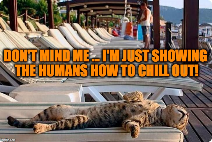 Feline Educator | DON'T MIND ME ... I'M JUST SHOWING THE HUMANS HOW TO CHILL OUT! | image tagged in chillin' on vacay | made w/ Imgflip meme maker