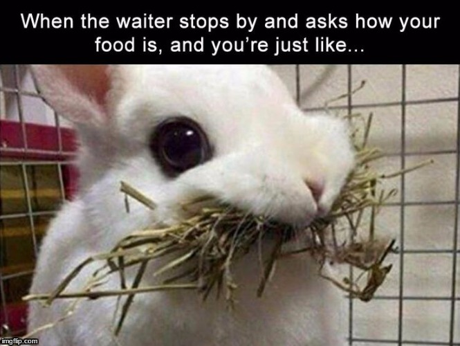 image tagged in true,yes,bunny,food | made w/ Imgflip meme maker