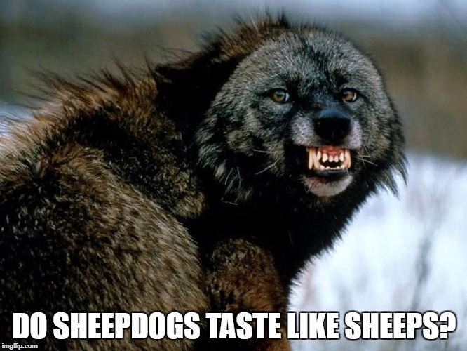 DO SHEEPDOGS TASTE LIKE SHEEPS? | image tagged in law | made w/ Imgflip meme maker