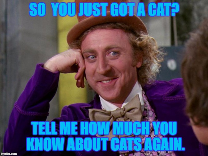 charlie-chocolate-factory | SO  YOU JUST GOT A CAT? TELL ME HOW MUCH YOU KNOW ABOUT CATS AGAIN. | image tagged in charlie-chocolate-factory | made w/ Imgflip meme maker