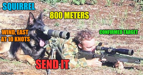 Sniper doge. Military week Nov 5-11  | SQUIRREL 800 METERS WIND, EAST AT 10 KNOTS SEND IT CONFIRMED TARGET | image tagged in memes,military humor,military week,funny,doge | made w/ Imgflip meme maker