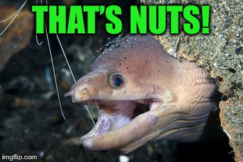 Happy Eel | THAT'S NUTS! | image tagged in happy eel | made w/ Imgflip meme maker