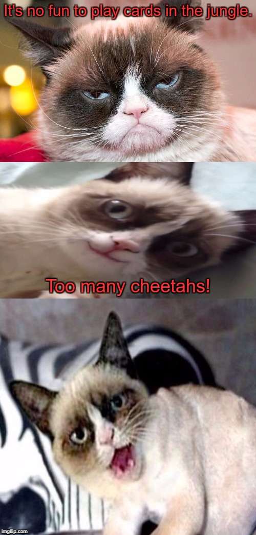Bad Pun Grumpy Cat | It's no fun to play cards in the jungle. Too many cheetahs! | image tagged in bad pun grumpy cat | made w/ Imgflip meme maker
