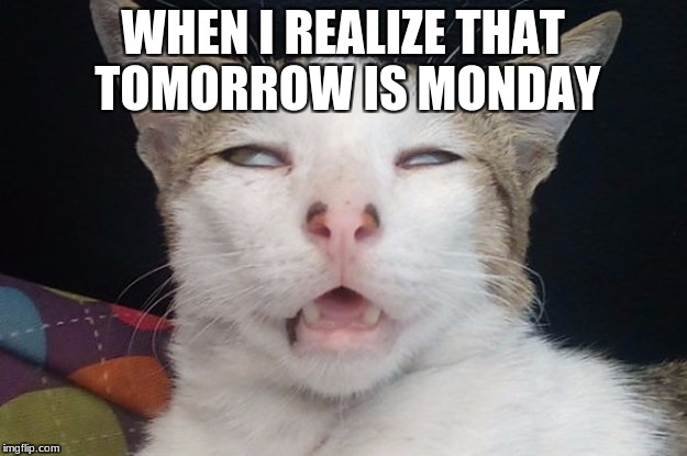 WHEN I REALIZE THAT TOMORROW IS MONDAY | image tagged in i mean,honestly | made w/ Imgflip meme maker