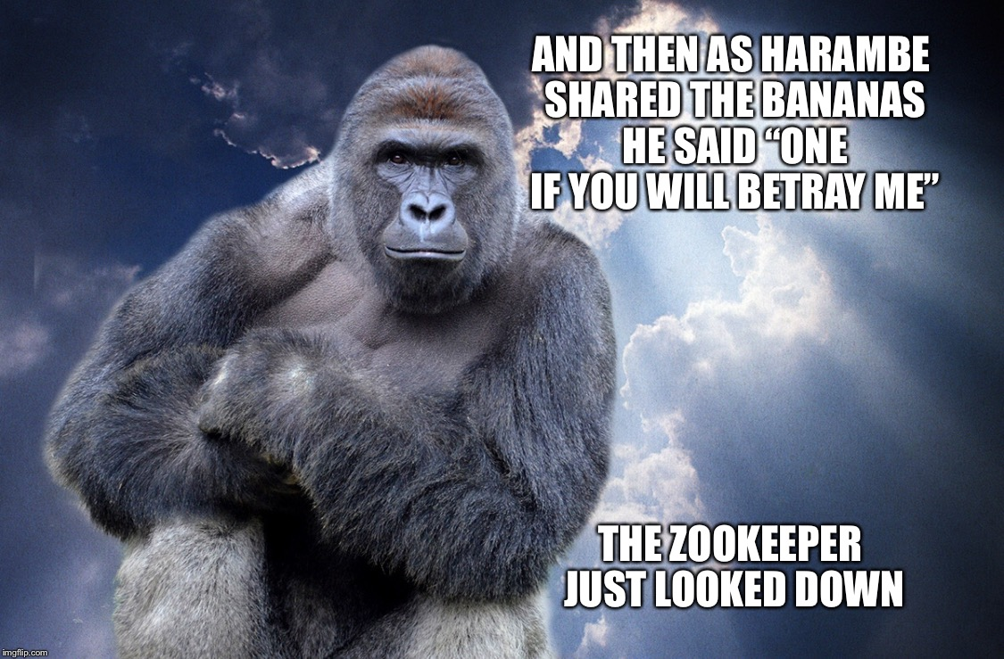 "Harambe | AND THEN AS HARAMBE SHARED THE BANANAS HE SAID ""ONE IF YOU WILL BETRAY ME"" THE ZOOKEEPER JUST LOOKED DOWN 
