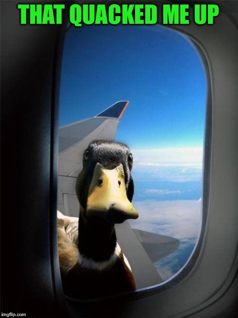 Let Me In Duck | THAT QUACKED ME UP | image tagged in let me in duck | made w/ Imgflip meme maker