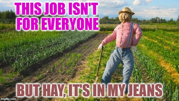 Scarecrow in field | THIS JOB ISN'T FOR EVERYONE BUT HAY, IT'S IN MY JEANS | image tagged in scarecrow in field | made w/ Imgflip meme maker