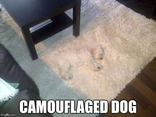 CAMOUFLAGED DOG | image tagged in camo dog | made w/ Imgflip meme maker
