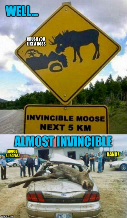 Better Call the C.A.A. Eh! (Not My Lumina. Not My Moose Either.) | WELL... ALMOST INVINCIBLE MOOSE BURGERS! DANG! CRUSH YOU LIKE A BOSS | image tagged in car meme,funny sign,moose,car crash,car accident | made w/ Imgflip meme maker