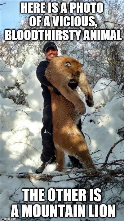 This guy is a dick. | HERE IS A PHOTO OF A VICIOUS, BLOODTHIRSTY ANIMAL THE OTHER IS A MOUNTAIN LION | image tagged in animal,hunter,mountain lion | made w/ Imgflip meme maker