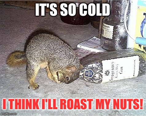 Desperate times call for desperate measures! | IT'S SO COLD I THINK I'LL ROAST MY NUTS! | image tagged in frustrated squirrel,winter,winter storm,nuts | made w/ Imgflip meme maker