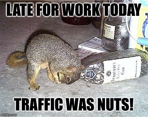 Frustrated Squirrel is Frustrated | LATE FOR WORK TODAY TRAFFIC WAS NUTS! | image tagged in frustrated squirrel,nuts | made w/ Imgflip meme maker