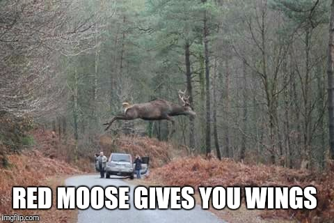 Amoosing | RED MOOSE GIVES YOU WINGS | image tagged in moose,jump,red bull | made w/ Imgflip meme maker