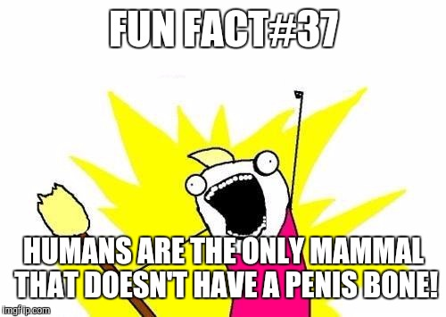 X All The Y Meme | FUN FACT#37 HUMANS ARE THE ONLY MAMMAL THAT DOESN'T HAVE A P**IS BONE! | image tagged in memes,x all the y | made w/ Imgflip meme maker