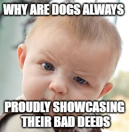 Skeptical Baby Meme | WHY ARE DOGS ALWAYS PROUDLY SHOWCASING THEIR BAD DEEDS | image tagged in memes,skeptical baby | made w/ Imgflip meme maker