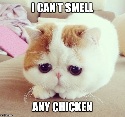 I CAN'T SMELL ANY CHICKEN | made w/ Imgflip meme maker