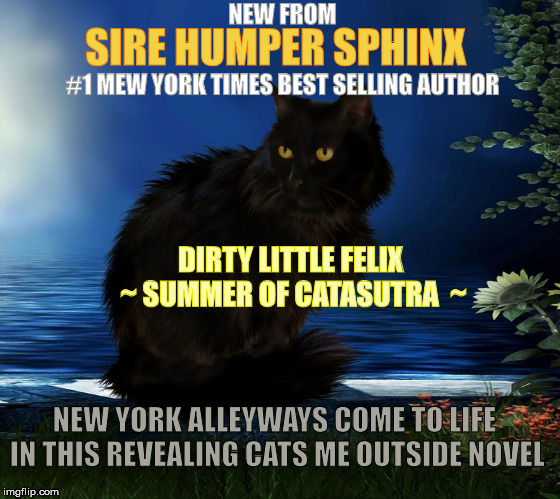 A Must Read | NEW FROM SIRE HUMPER SPHINX #1 MEW YORK TIMES BEST SELLING AUTHOR DIRTY LITTLE FELIX  ~ SUMMER OF CATASUTRA  ~ NEW YORK ALLEYWAYS COME TO LI | image tagged in memes,cats,animals,stupid,books | made w/ Imgflip meme maker