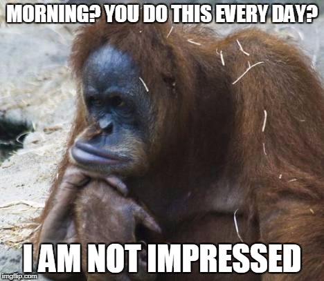 MORNING? YOU DO THIS EVERY DAY? I AM NOT IMPRESSED | image tagged in unimpressed oragutan,memes,funny animals,bored,mornings | made w/ Imgflip meme maker