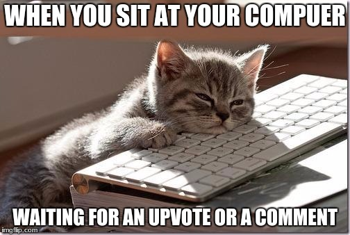 It's a plague! | WHEN YOU SIT AT YOUR COMPUER WAITING FOR AN UPVOTE OR A COMMENT | image tagged in bored keyboard cat,waiting,comments,no upvotes | made w/ Imgflip meme maker