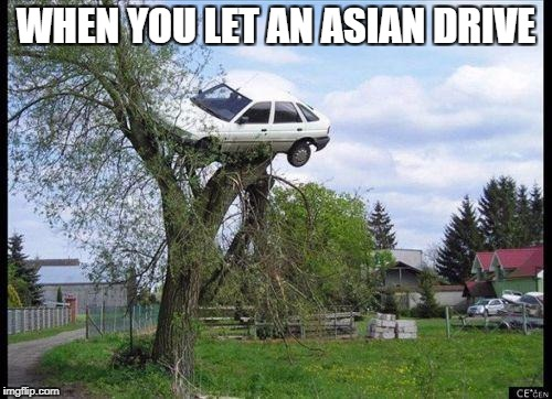 car in tree | WHEN YOU LET AN ASIAN DRIVE | image tagged in car in tree | made w/ Imgflip meme maker