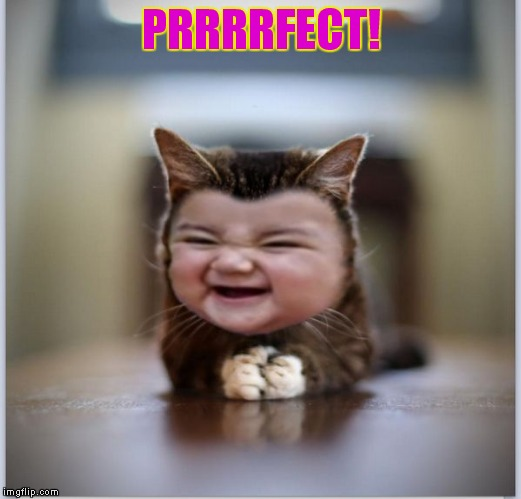 evil toddler kitten | PRRRRFECT! | image tagged in evil toddler kitten | made w/ Imgflip meme maker