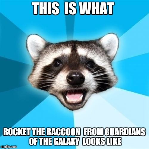 Lame Pun Coon Meme | THIS  IS WHAT ROCKET THE RACCOON  FROM GUARDIANS OF THE GALAXY  LOOKS LIKE | image tagged in memes,lame pun coon | made w/ Imgflip meme maker