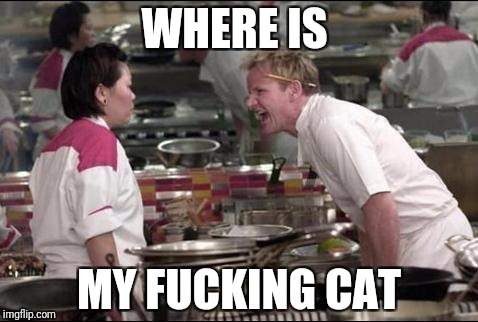 Angry Chef Gordon Ramsay Meme | WHERE IS MY F**KING CAT | image tagged in memes,angry chef gordon ramsay | made w/ Imgflip meme maker