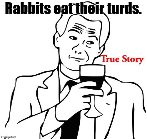 true story | Rabbits eat their turds. | image tagged in true story | made w/ Imgflip meme maker