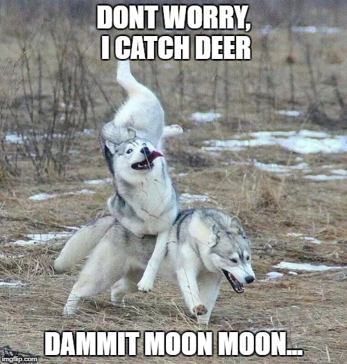 DONT WORRY, I CATCH DEER DAMMIT MOON MOON... | image tagged in moon moon | made w/ Imgflip meme maker