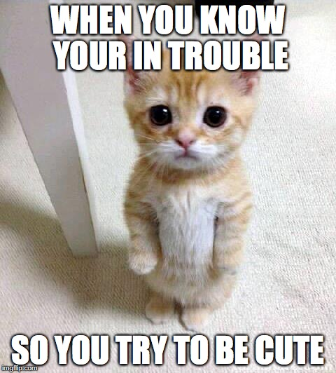 Cute Cat |  WHEN YOU KNOW YOUR IN TROUBLE; SO YOU TRY TO BE CUTE | image tagged in memes,cute cat | made w/ Imgflip meme maker