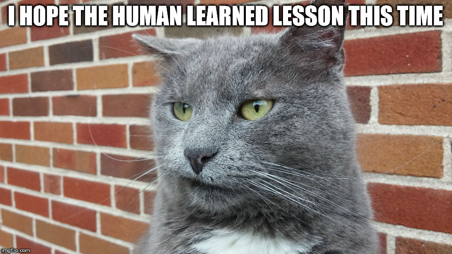 Evil Cat | I HOPE THE HUMAN LEARNED LESSON THIS TIME | image tagged in evil cat | made w/ Imgflip meme maker
