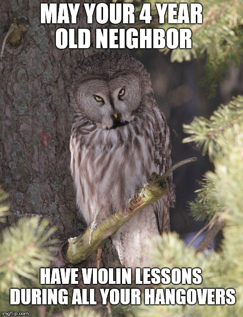 Insult Owl  | MAY YOUR 4 YEAR OLD NEIGHBOR HAVE VIOLIN LESSONS DURING ALL YOUR HANGOVERS | image tagged in memes,owl,animals,insult,go away | made w/ Imgflip meme maker