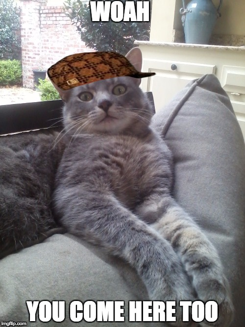 Gangstar cat | WOAH YOU COME HERE TOO | image tagged in cats | made w/ Imgflip meme maker