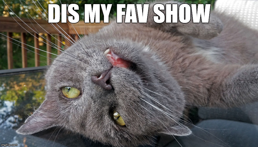 Faded Cat | DIS MY FAV SHOW | image tagged in faded cat | made w/ Imgflip meme maker
