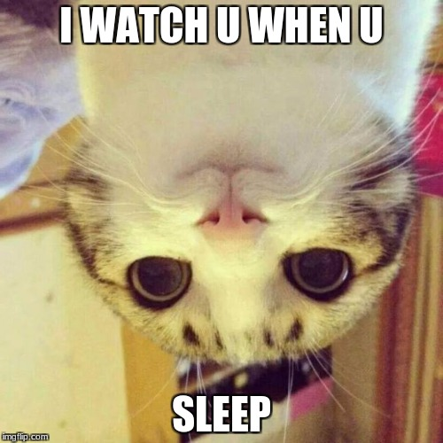 Smiling Cat Meme | I WATCH U WHEN U SLEEP | image tagged in memes,smiling cat | made w/ Imgflip meme maker