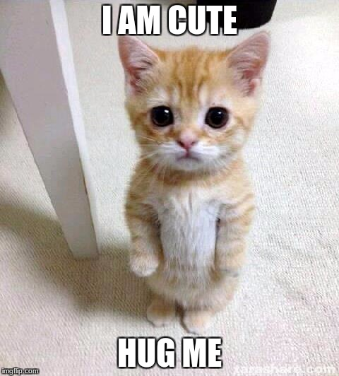 Cute Cat Meme | I AM CUTE HUG ME | image tagged in memes,cute cat | made w/ Imgflip meme maker