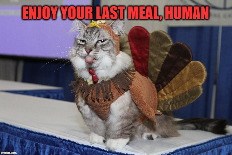 My Name is NOT Tom | ENJOY YOUR LAST MEAL, HUMAN | image tagged in thanksgiving,funny cats,cats,cat,turkey | made w/ Imgflip meme maker