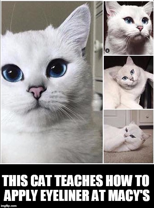 Cats With Good Jobs | THIS CAT TEACHES HOW TO APPLY EYELINER AT MACY'S | image tagged in vince vance,makeup artist,cat memes,funny cat memes,white cat,sexy cat | made w/ Imgflip meme maker