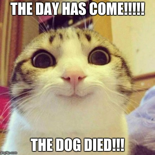 Smiling Cat Meme | THE DAY HAS COME!!!!! THE DOG DIED!!! | image tagged in memes,smiling cat | made w/ Imgflip meme maker